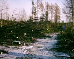 Minuloročné stretnutie ovplyvnila víchrica - popadané stromy na ceste