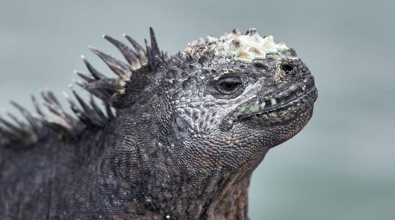 Galapágy sú povestné unikátnou faunou
